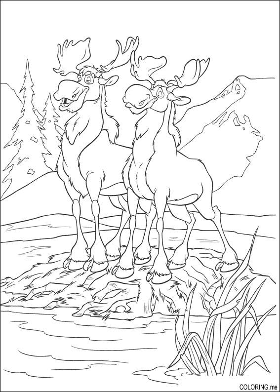 Coloring page : Brother bear moose on island - Coloring.me
