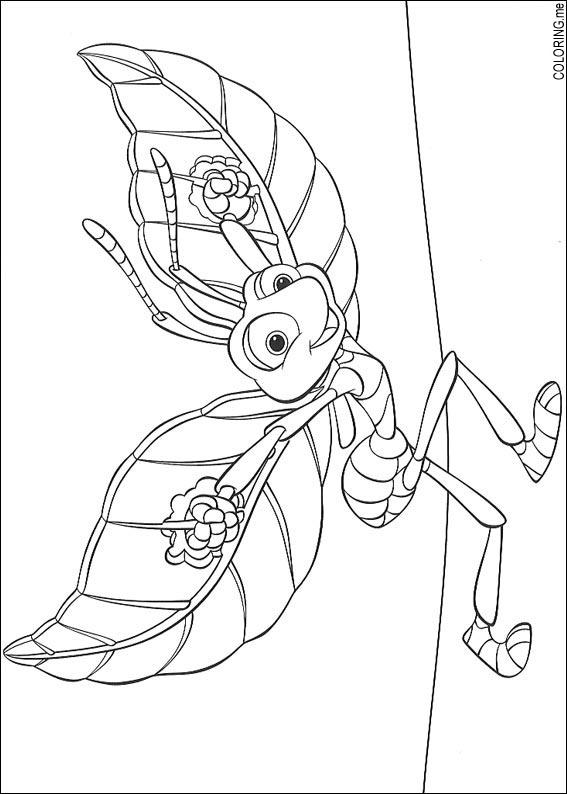 Coloring Page Bugs Life Fly